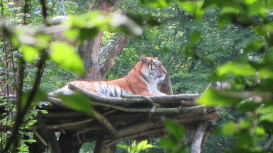Introvertierte haben den Tiger im Tank